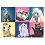 Puzzle  Trefl-37377 Kittens