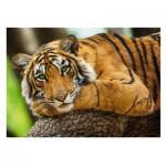 Puzzle  Trefl-37397 Tiger Portrait