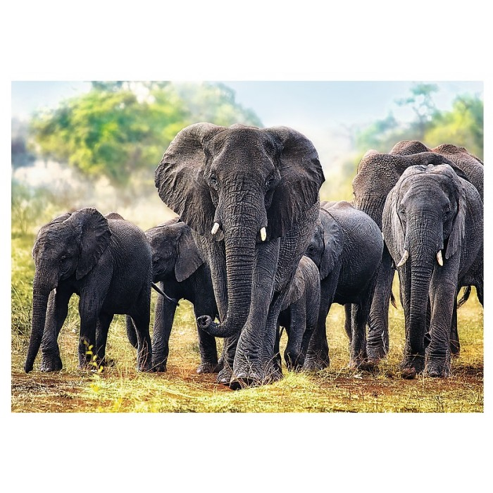African Elephants Puzzle 1000 pieces