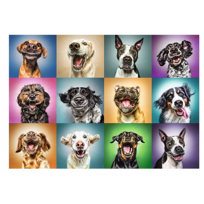 Funny Dog Portraits Puzzle 1000 pieces
