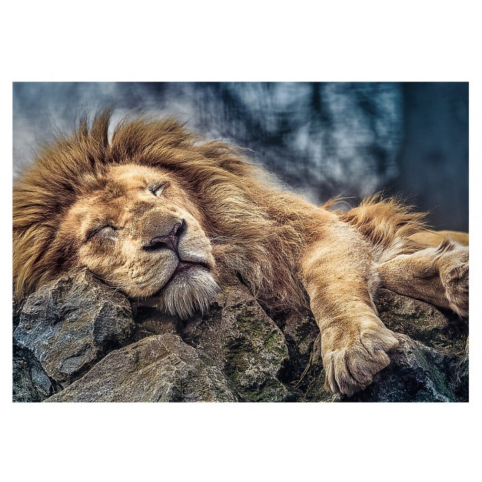 Sleeping Lion Puzzle 1000 pieces