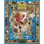 White-Mountain-164 Jigsaw Puzzle - 1000 Pieces - Seashells and Shellfish